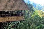 Laos, Jungle Hotel