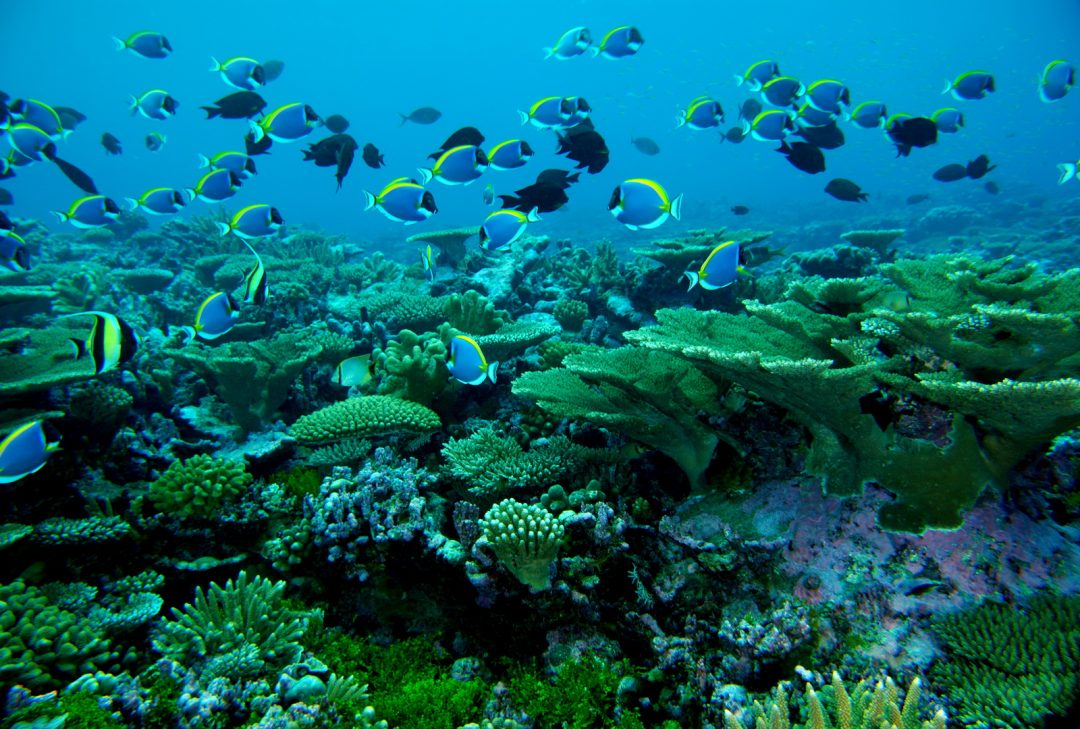 Maldives, reef life