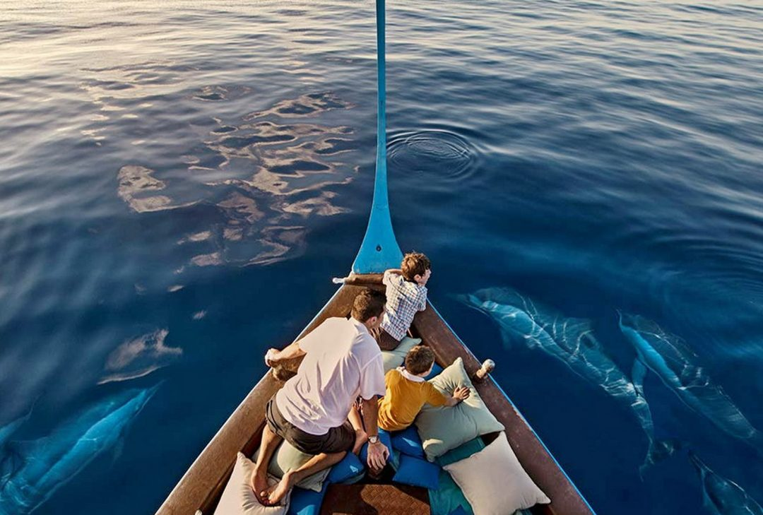 Maldives, dolphin monitoring