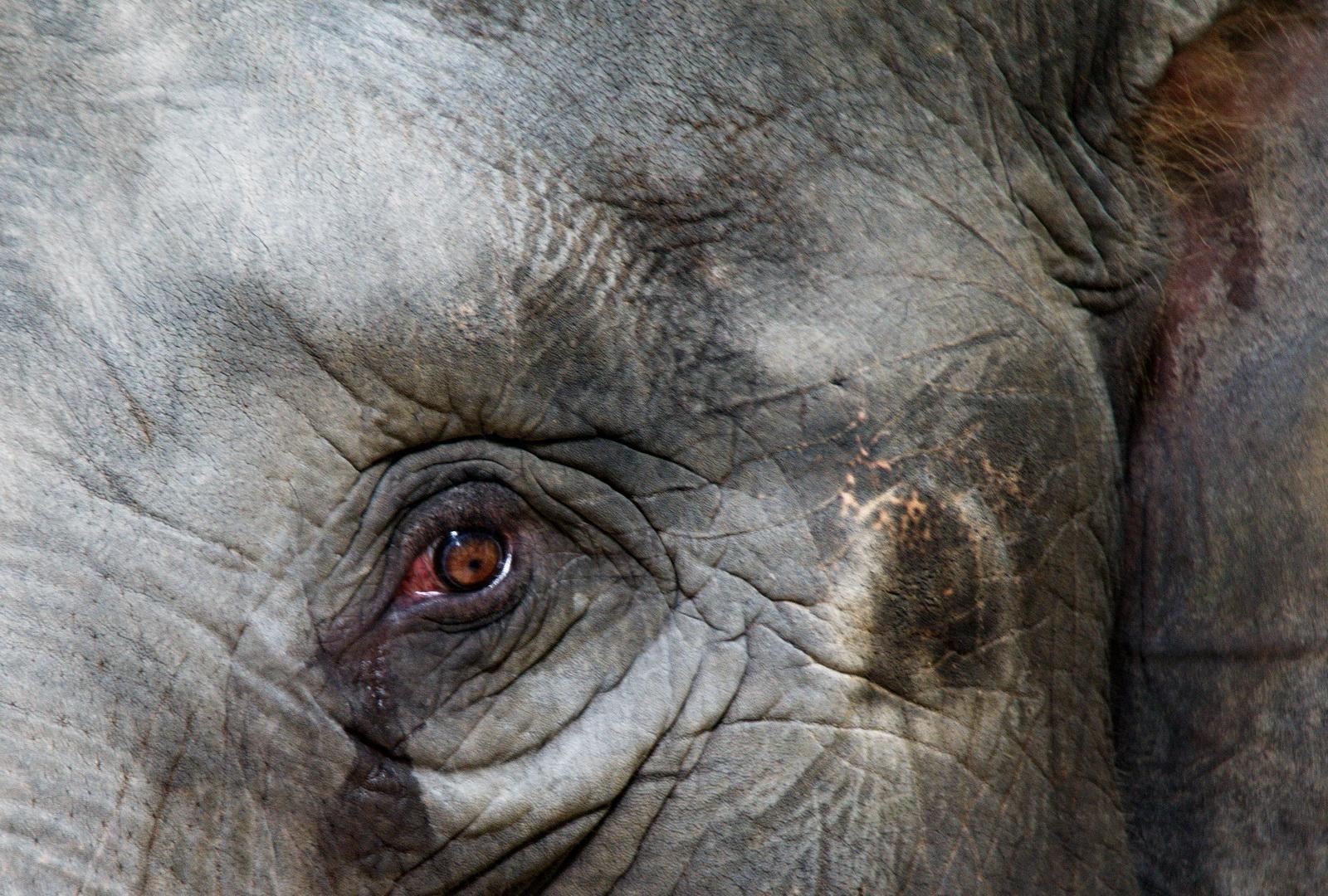 Thailand, Lampang elephant hospital