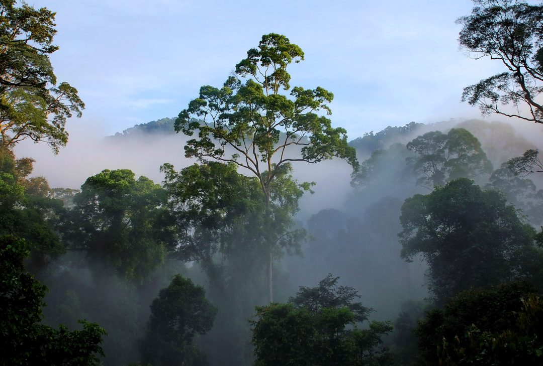 Generic Borneo rainforest image
