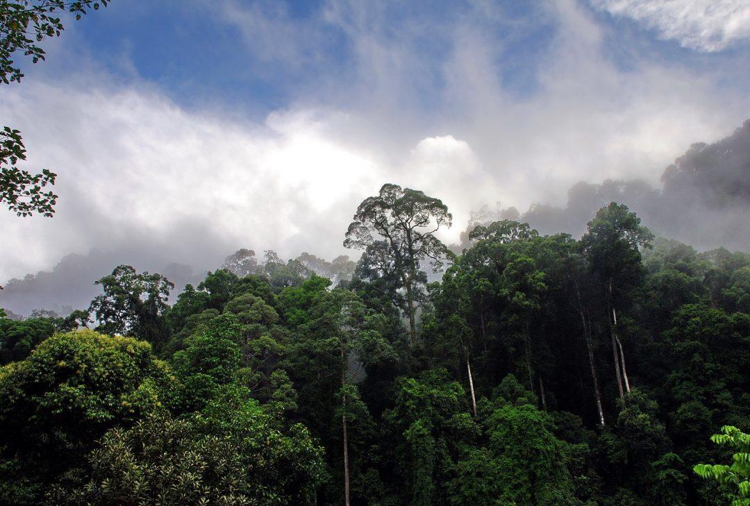 Malaysia, Danum Valley