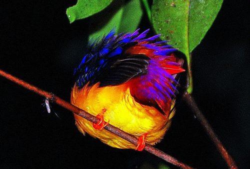 https://allpointseast.com/wp-content/uploads/2017/06/sleeping-bird-edit-2-edit-500x338.jpg