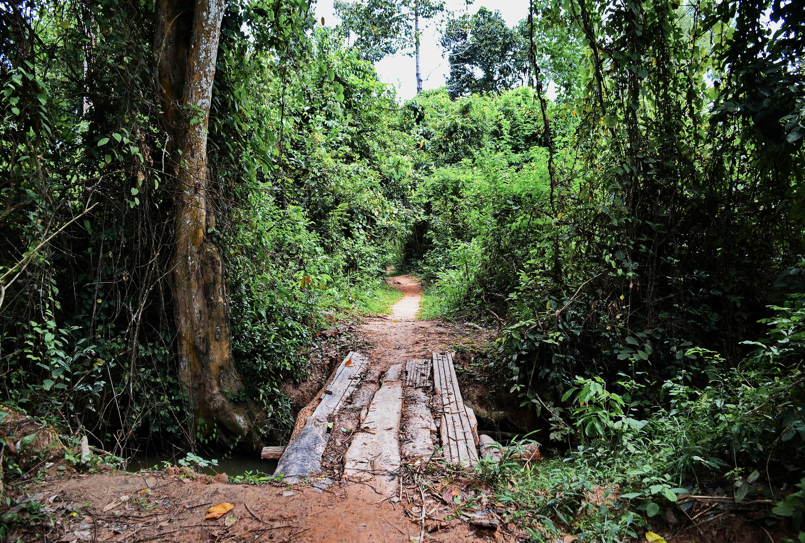 One of the better sections - trail to Banteay Ampil