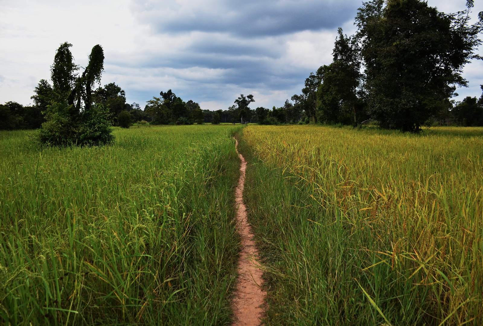 The picturesque trail heads east towards Banteay Ampil