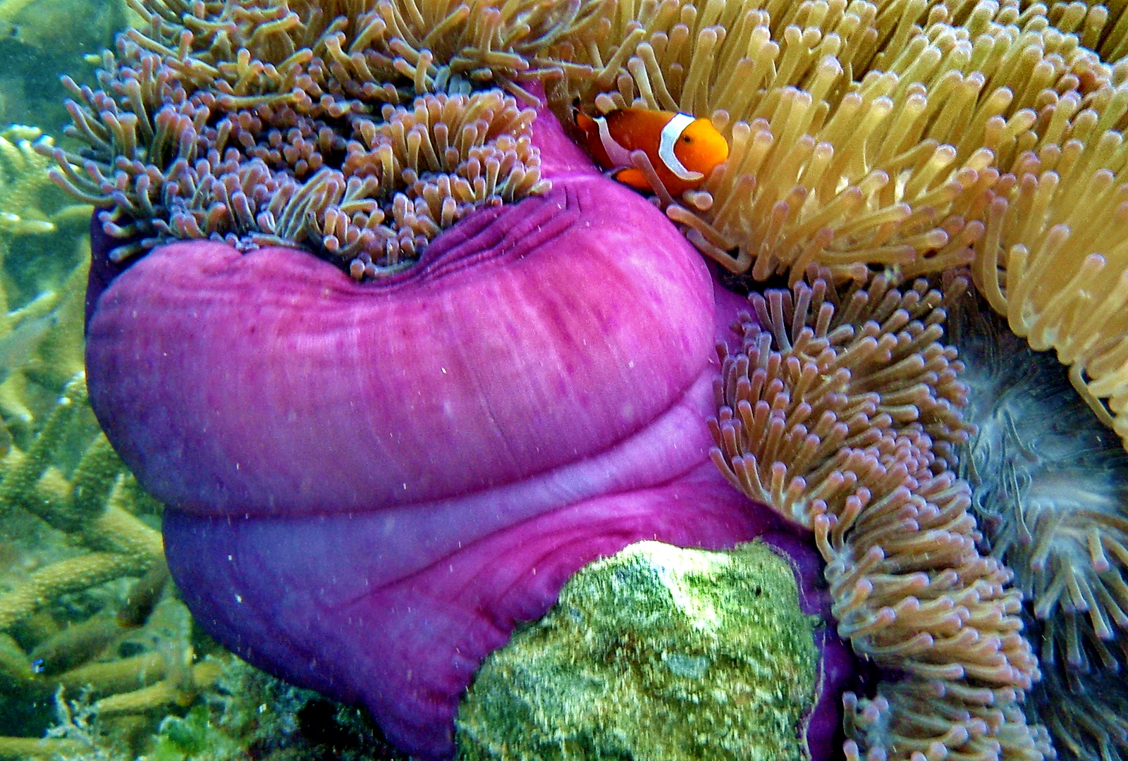 Malaysia, Coral Bay, Perhentian Besar