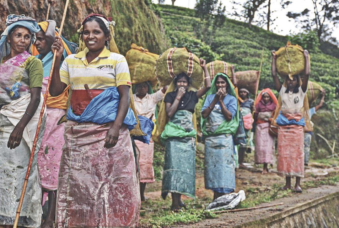 Sri Lanka, tea pickers, Hill Country