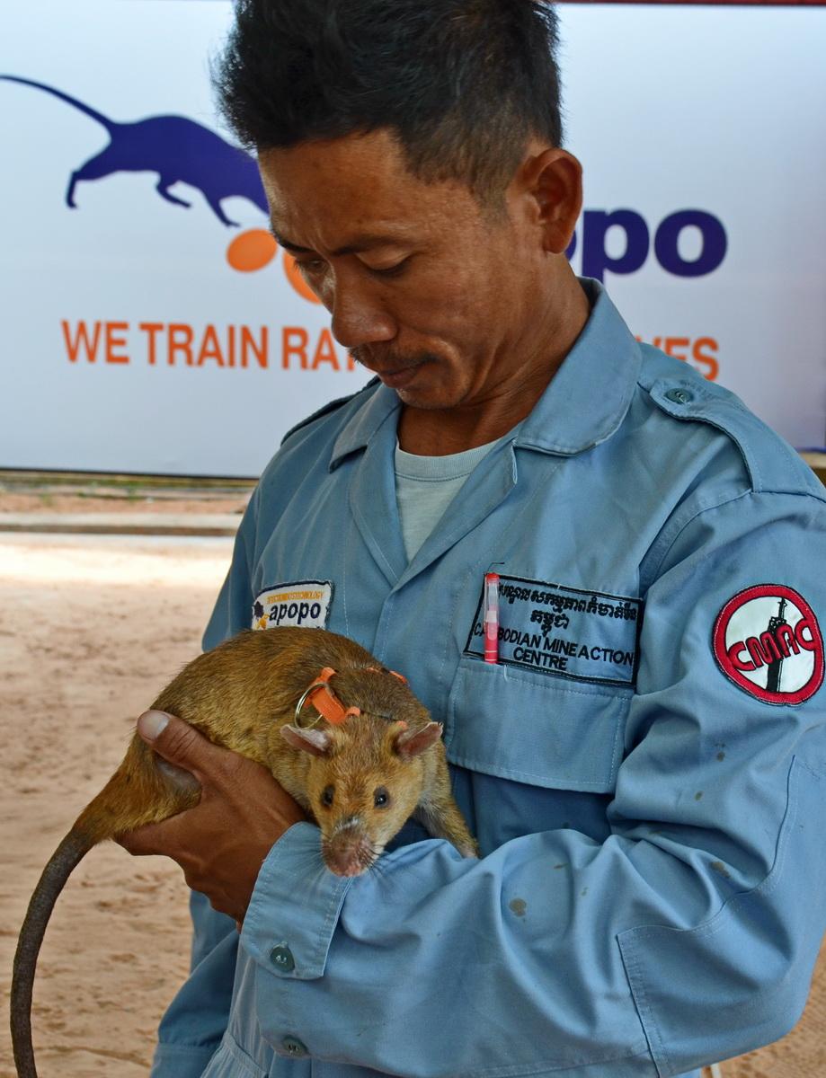 Cambodia, Apopo mine detection centrre