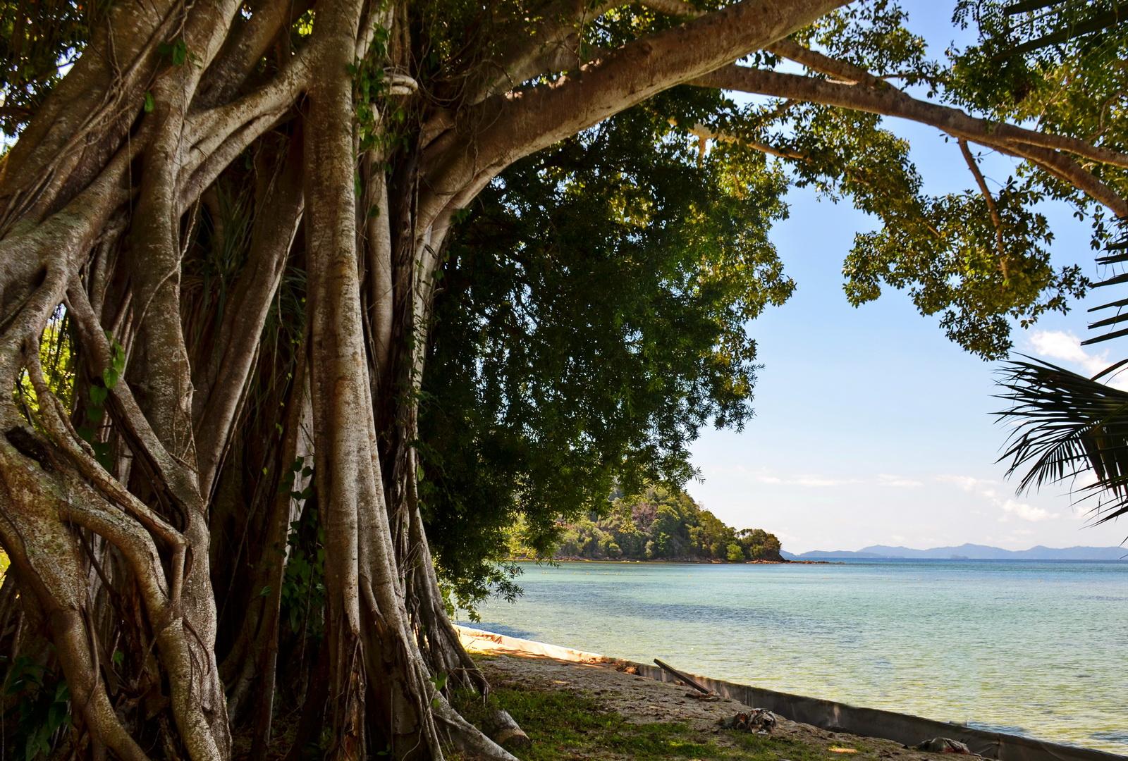 Malaysia. Nature on Dinawan island