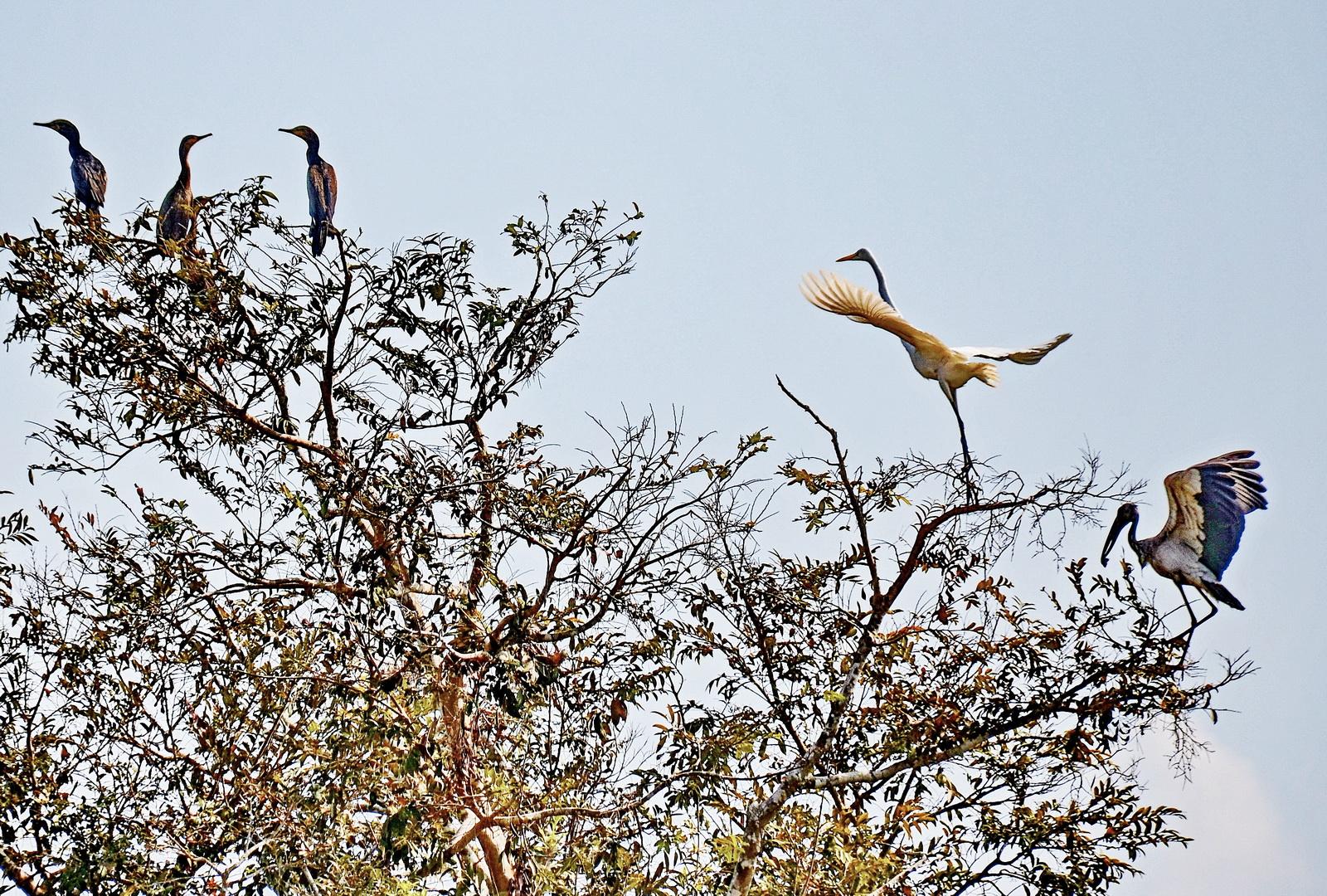 Birdlife on the Mongkol Borei River