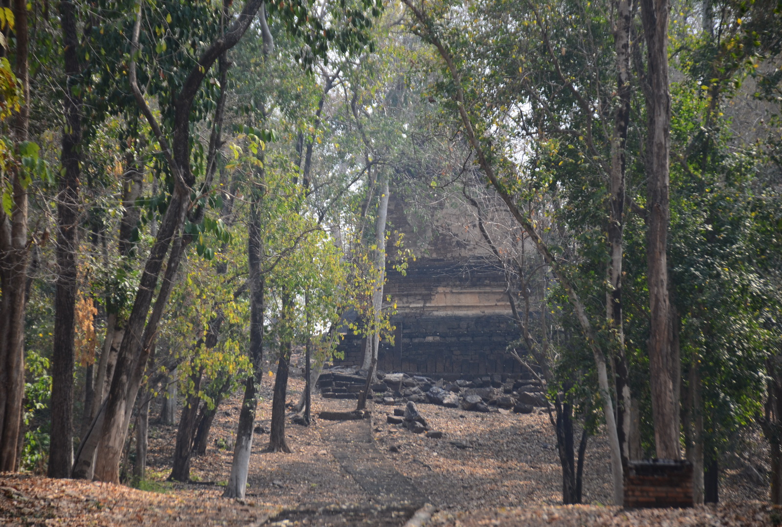 Wat Phanom Pleung amid the trees.